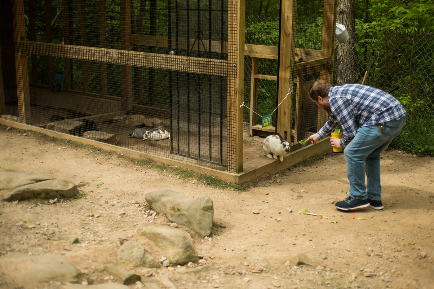 dad plays with animals at Yellow River Wildlife Sanctuary