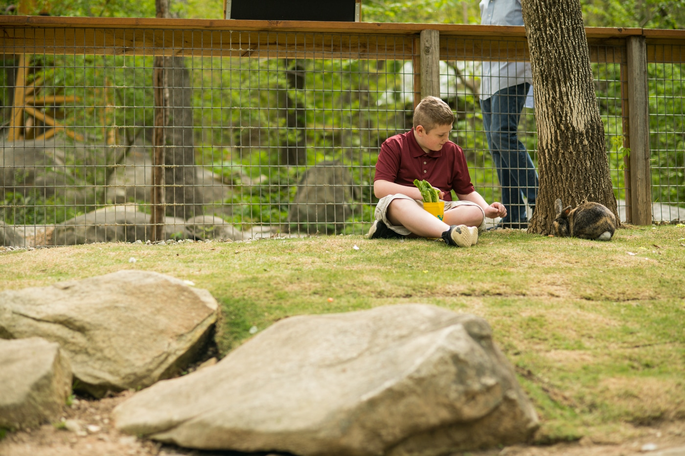 kid plays with animals during Yellow River Wildlife Sanctuary family photos