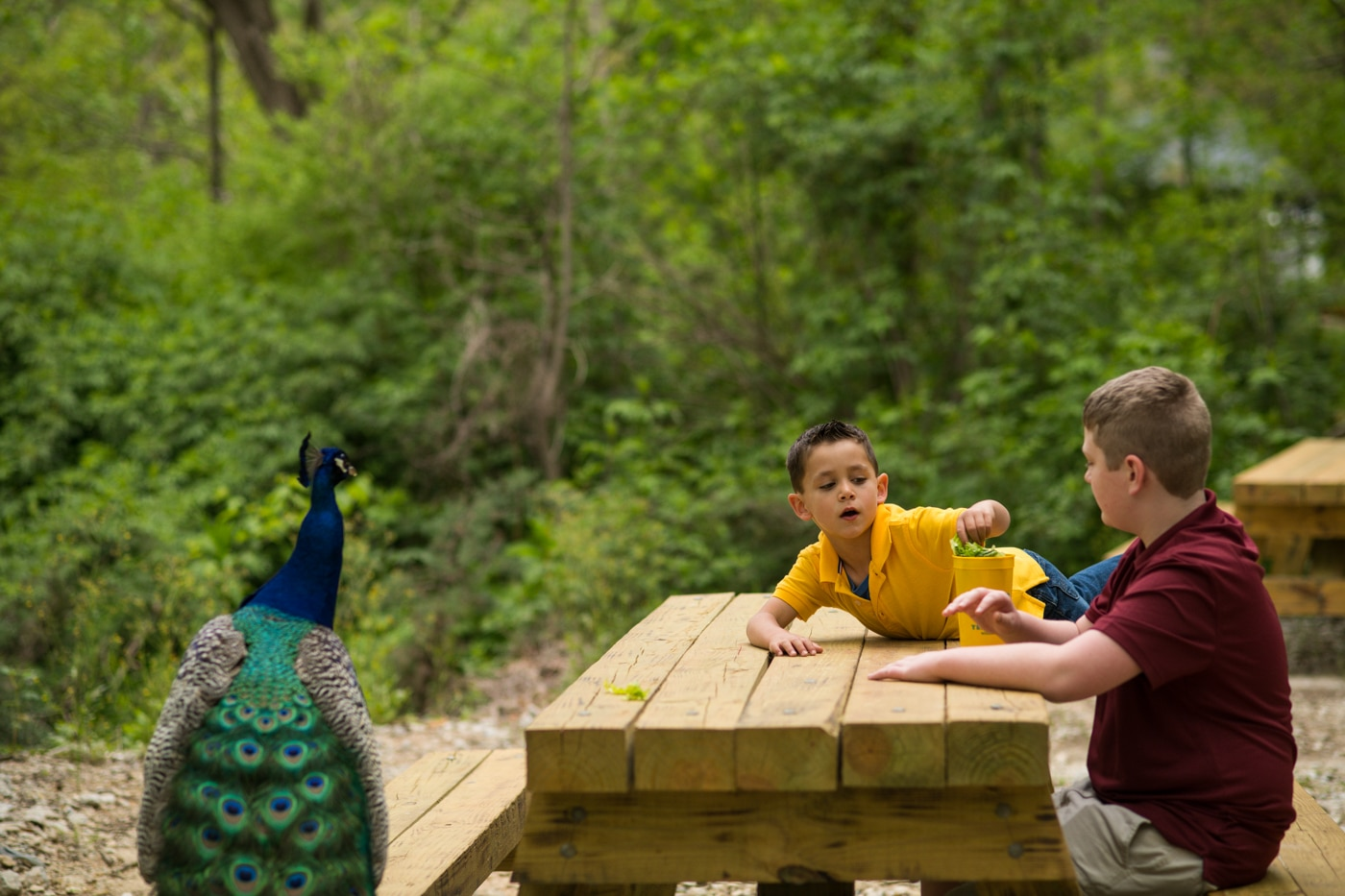 brothers sit at picnic table at Yellow River Wildlife Sanctuary