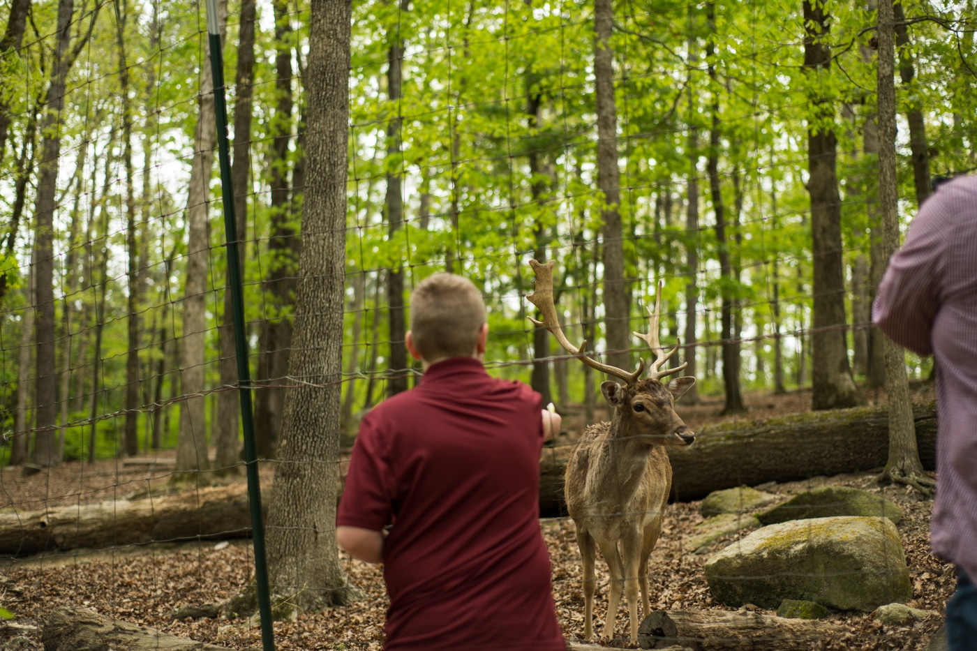 boy feeds deer during family portraits at Yellow River Wildlife Sanctuary