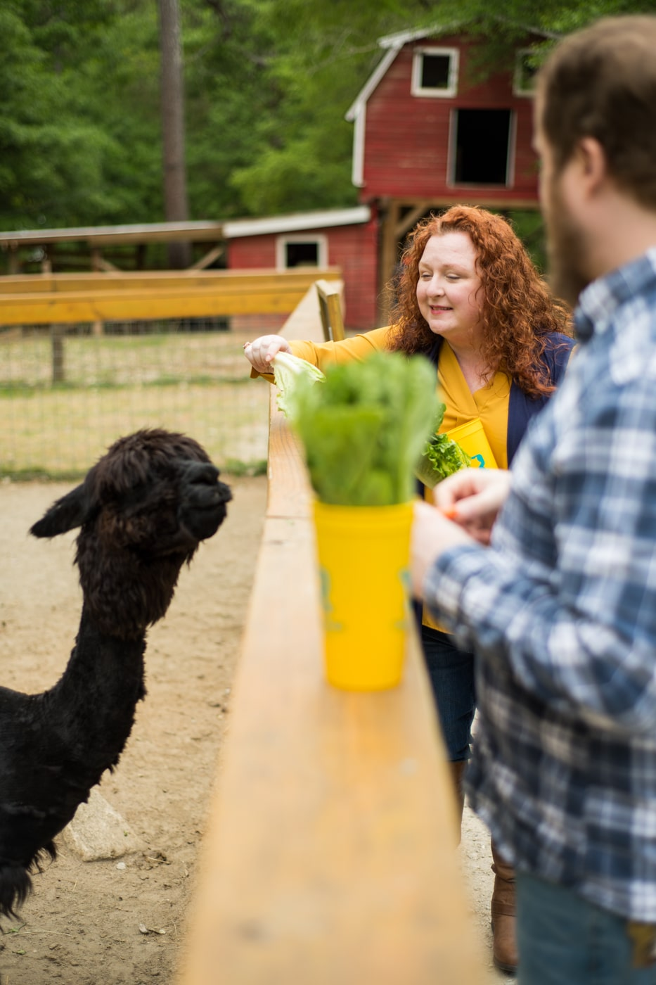 family feeds llamas during portraits at the Yellow River Wildlife Sanctuary